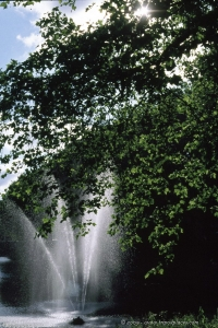 Fountain & leaves